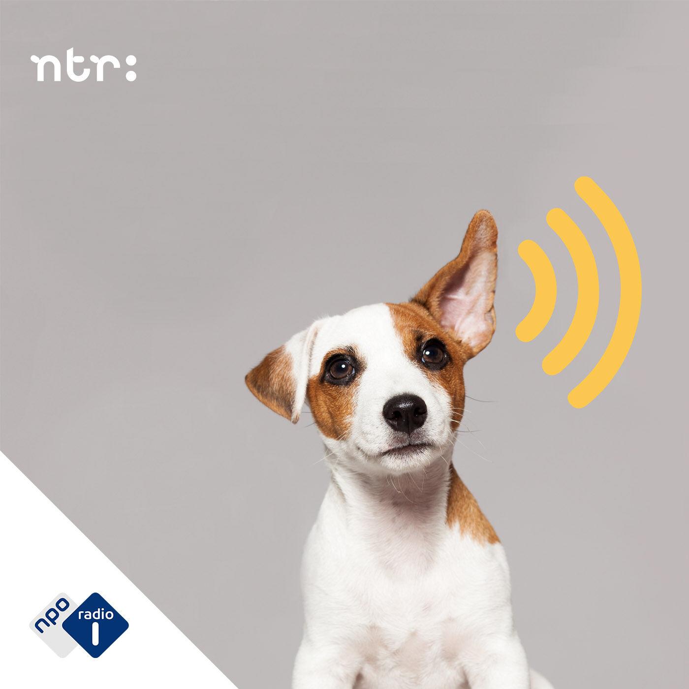 NTR Podcastprijs logo